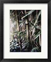 Framed Leaf III