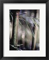Framed Leaf IV