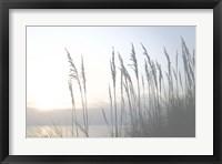 Morning Whisper II Framed Print