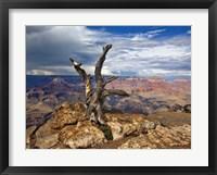 Framed Canyon View V