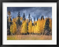 Through the Yellow Trees I Framed Print