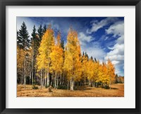 Through the Yellow Trees II Framed Print