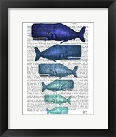 Framed Blue Whale Family
