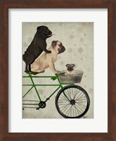 Framed Pugs on Bicycle
