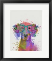 Framed Rainbow Splash Weimaraner, Portrait