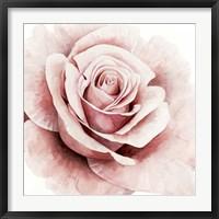 Framed Pink Rose I