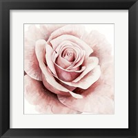 Framed Pink Rose I