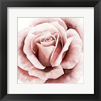 Framed Pink Rose II