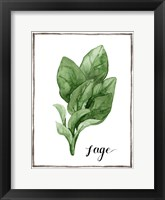 Framed Watercolor Herbs VI