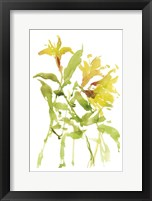 Framed Watercolor Lilies I