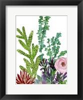 Little Garden II Framed Print