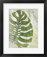 Frond III Framed Print