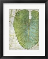 Frond IV Framed Print