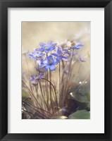 Framed Spring