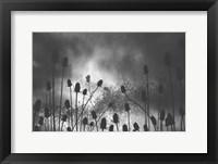 Framed Thistle Finch