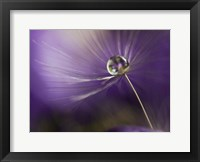 Framed In Shades Of Purple