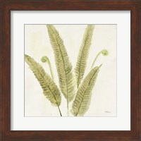 Framed Forest Ferns II