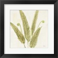 Framed Forest Ferns II