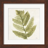 Framed Forest Ferns I