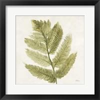 Framed Forest Ferns I