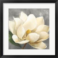 Framed Magnolia Blossom on Gray