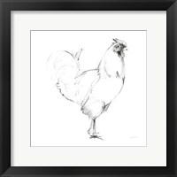 Rooster II Dark Square Framed Print