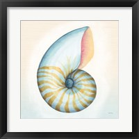 Boardwalk Nautilus Framed Print