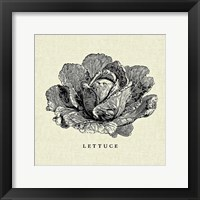 Framed Linen Vegetable BW Sketch Lettuce