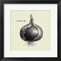 Framed Linen Vegetable BW Sketch Onion