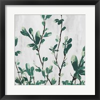 The Branch II Framed Print