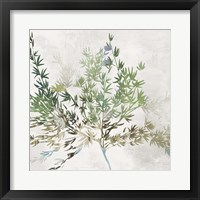 Framed Olive Branch