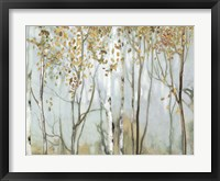 Framed Birch in the Fog II