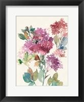 Framed Sweet Hydrangea II