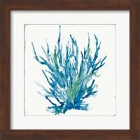 Framed Blue Coral I