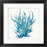 Framed Blue Coral I