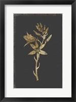 Framed Botanical Gold on Black I
