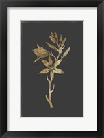 Framed Botanical Gold on Black I