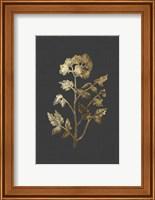 Framed Botanical Gold on Black II