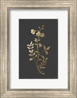 Framed Botanical Gold on Black IV
