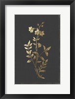Framed Botanical Gold on Black IV