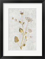 Framed Botanical Gold on White I