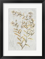 Framed Botanical Gold on White II