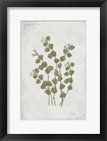Framed Botanical IV