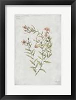 Framed Botanical V