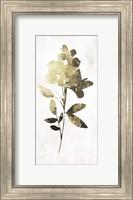 Framed Gold Botanical I