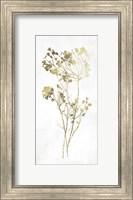Framed Gold Botanical II