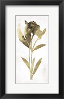 Framed Gold Botanical III