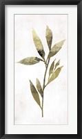 Framed Gold Botanical IV