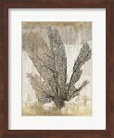 Framed Coral Splendor I