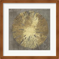 Framed Sand Dollar IA